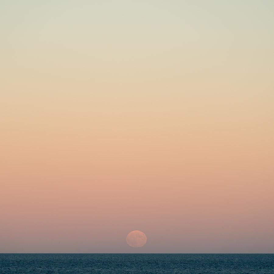 Chestnut Moon I