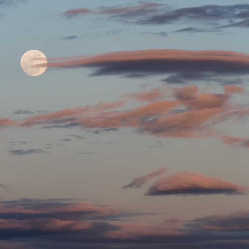 Bone Moon I