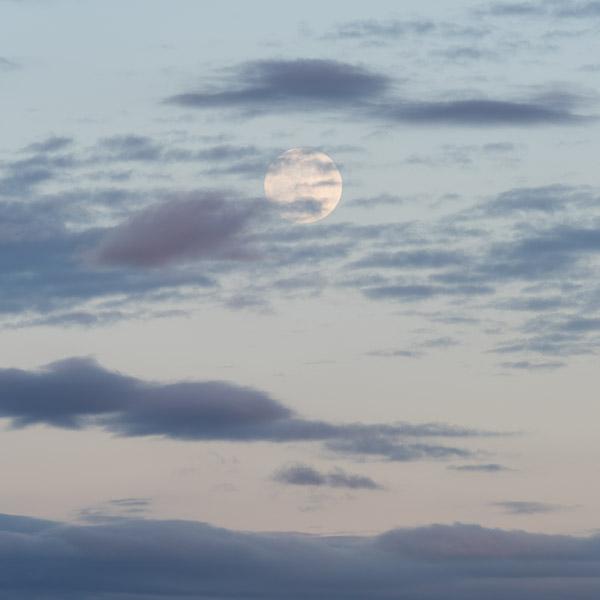 Bone Moon IV
