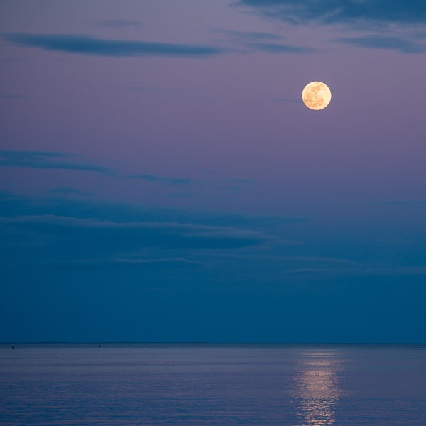 Chaste Moon I
