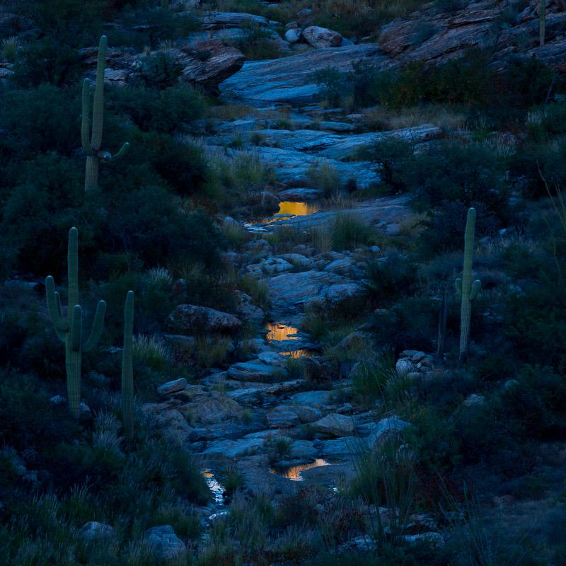 Saguaro National Park, Arizona, 2015