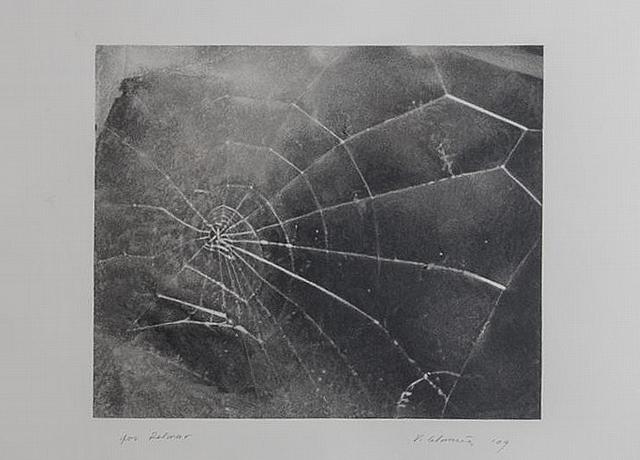 """ Spiderweb, for Lincoln Center/List Art Program ,"" by Vija Celmins, 2009, screenprint on black wove paper,  Stair Galleries  (December 2014)"
