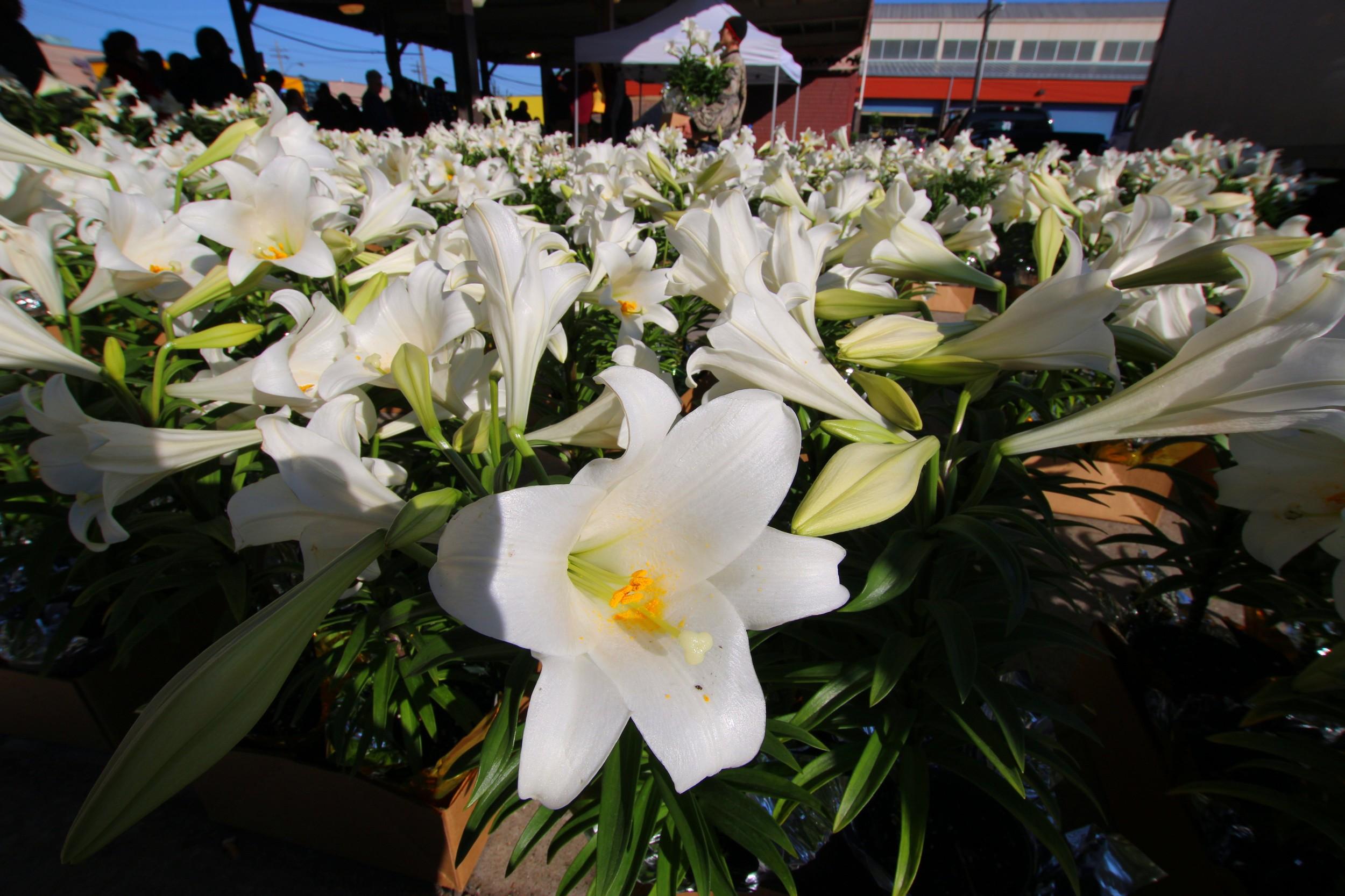 Easter Lilies - Eastern Market, Detroit, MI - April 2014