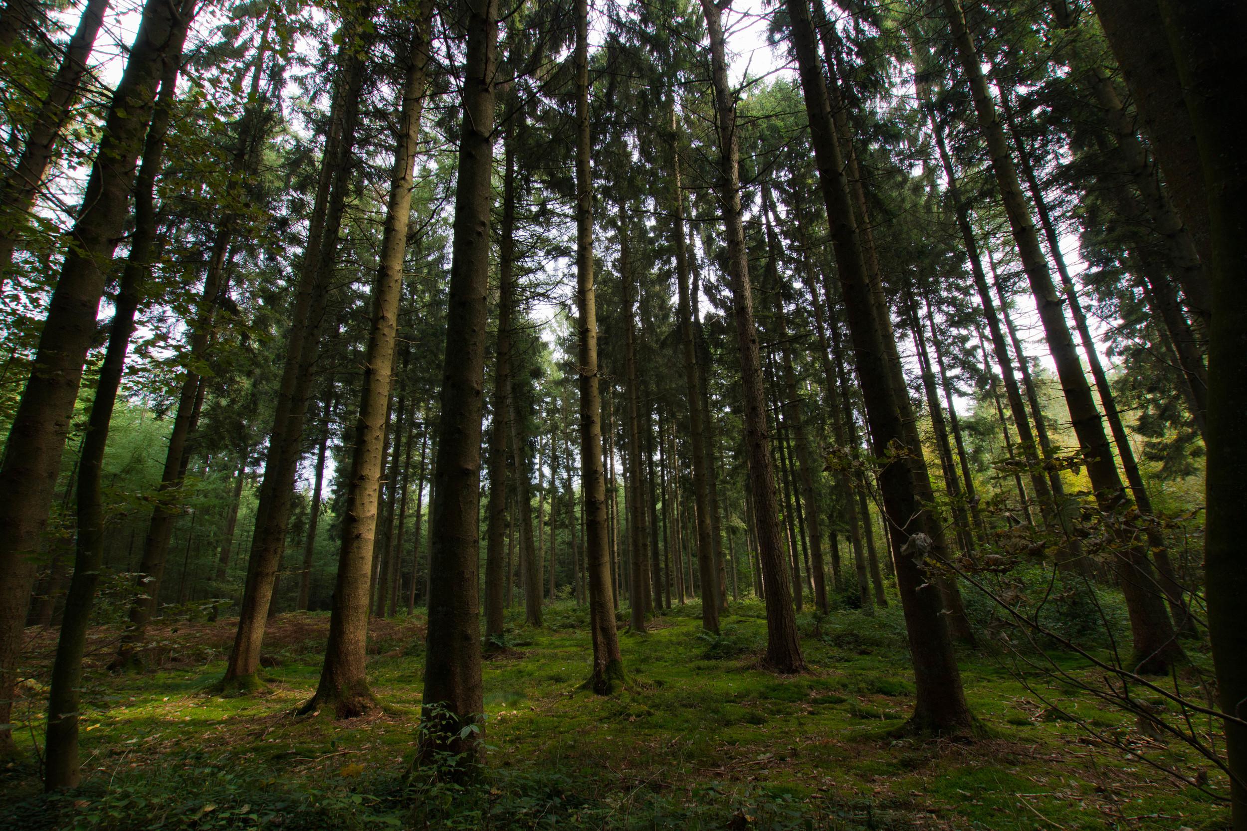 Forest - Chimay, Belgium - September 2014