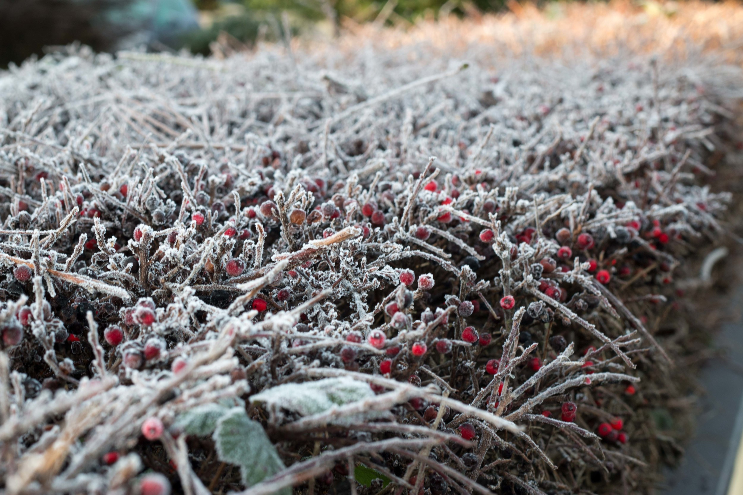The frost we woke up to in the morning.  It was a cold, sunny, beautiful Irish morning.