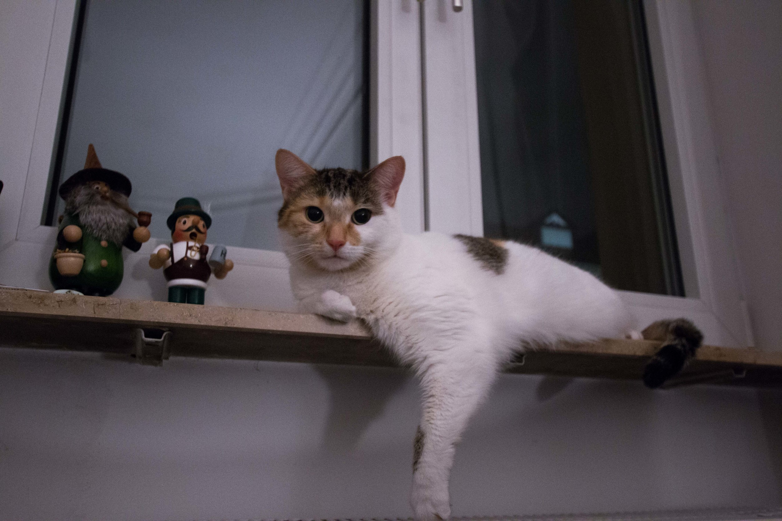 Her new favorite spot, the sill right above the radiator. TheQueen of Sheba is her new name.