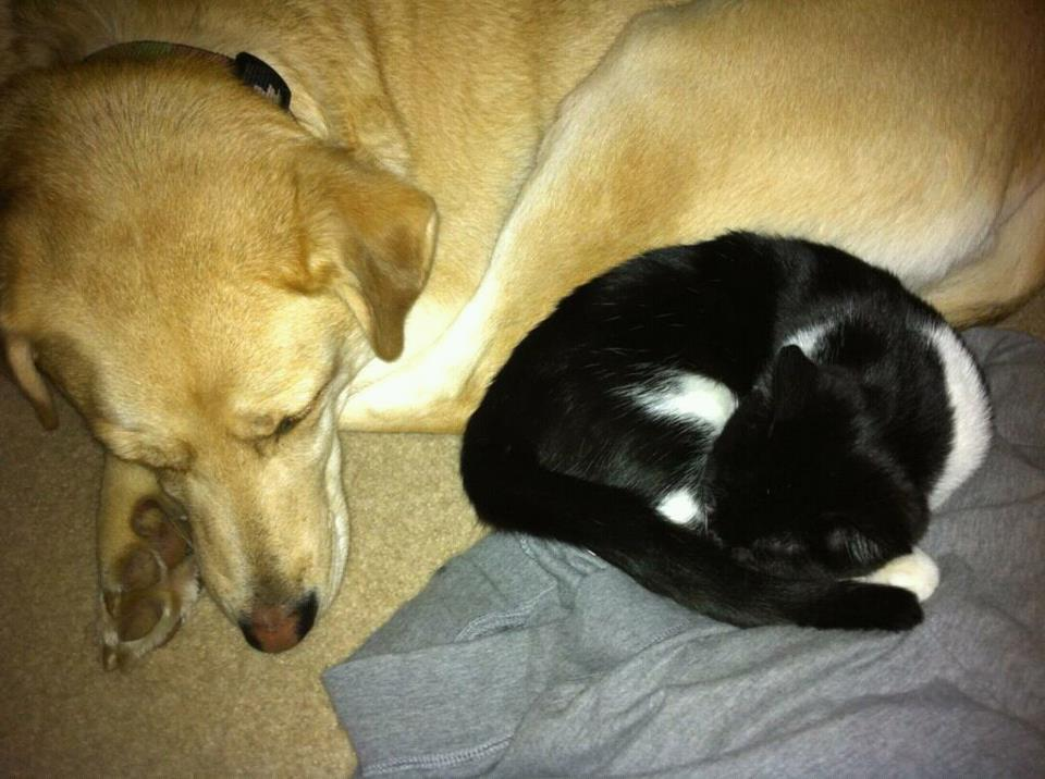 My sister's cat and our dog taking a nap together.