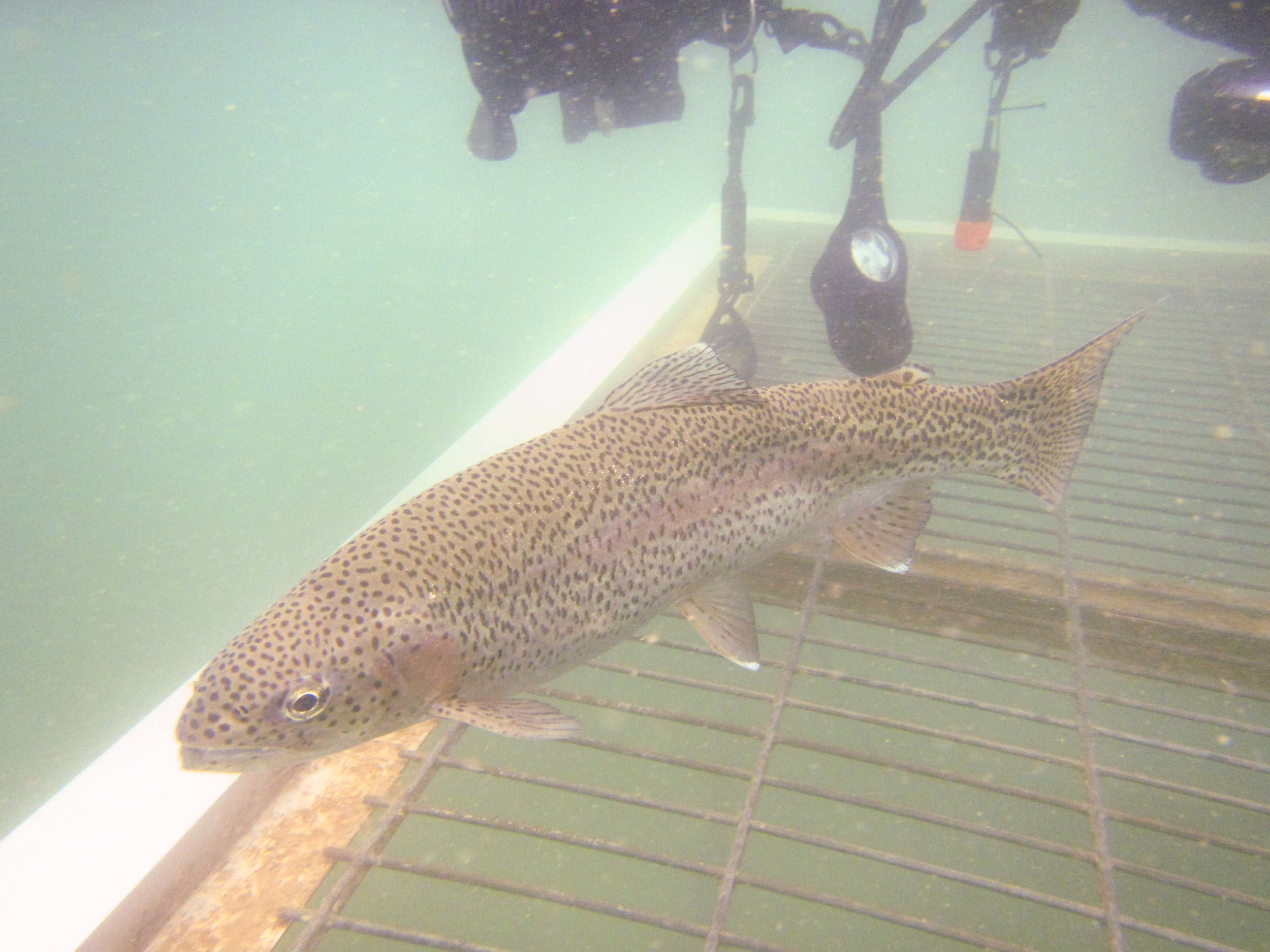 One of the many, many, many fish we were able to feed.