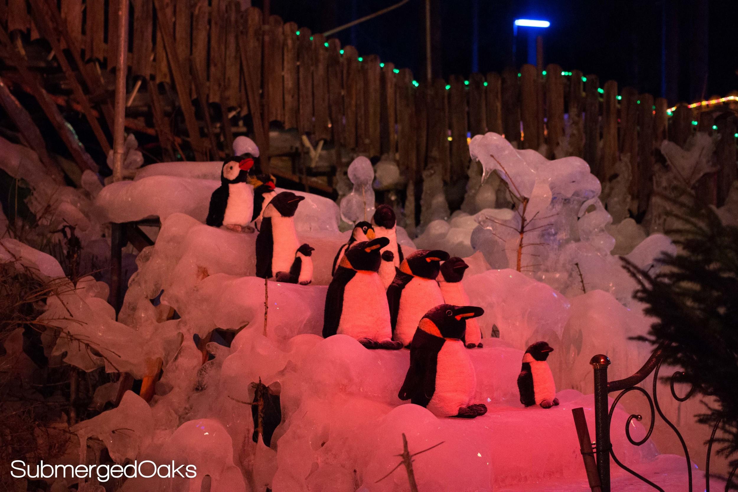 Penguins on ice steps