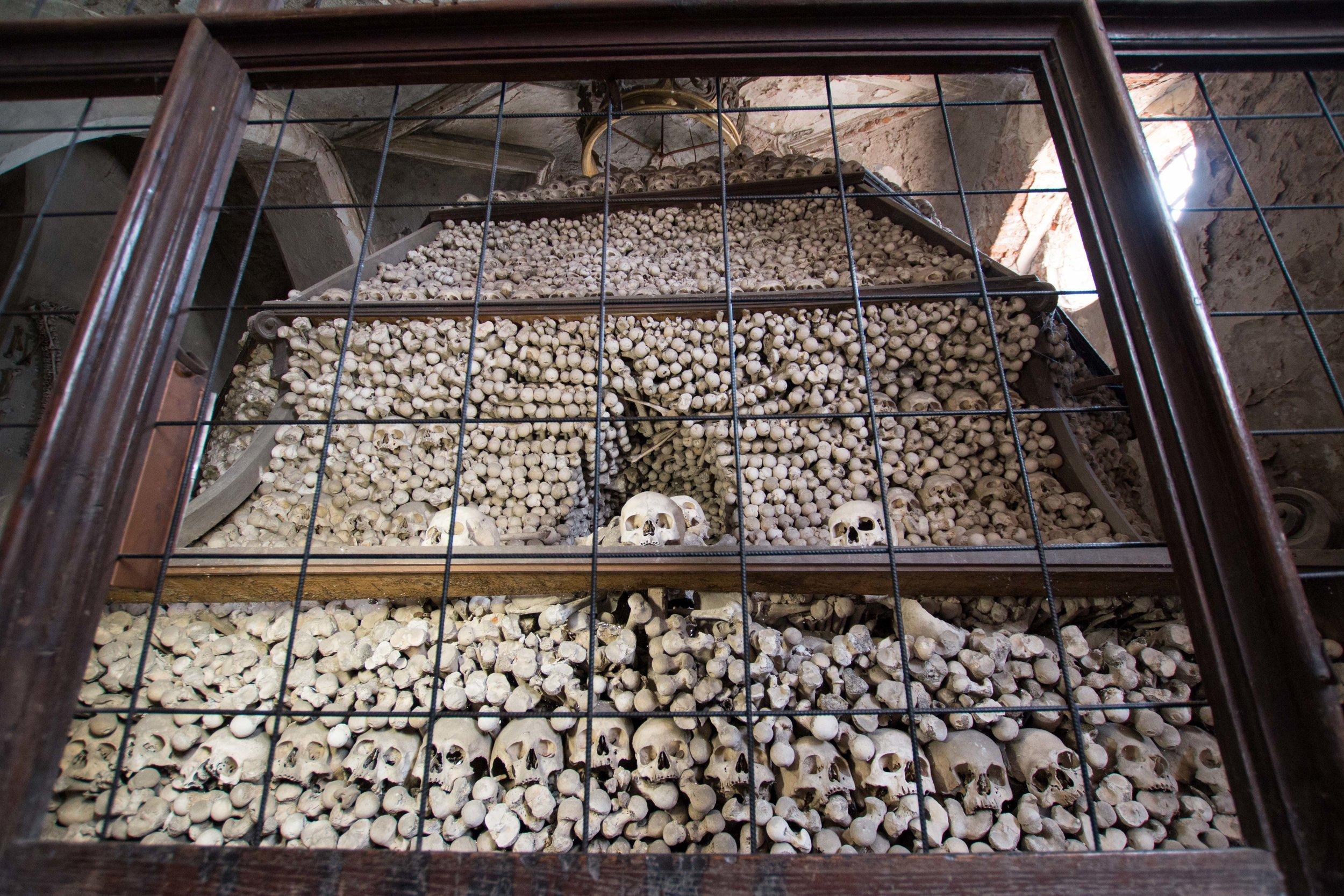 thousands of skulls, femurs, and long bones piled high