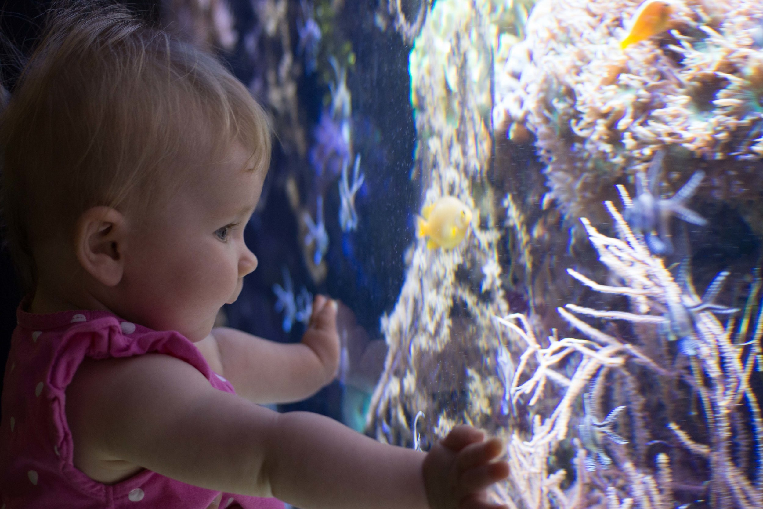One of my favorite pictures! Look how intently she's watching the little fish! I think we have a future scuba diver on our hands :)