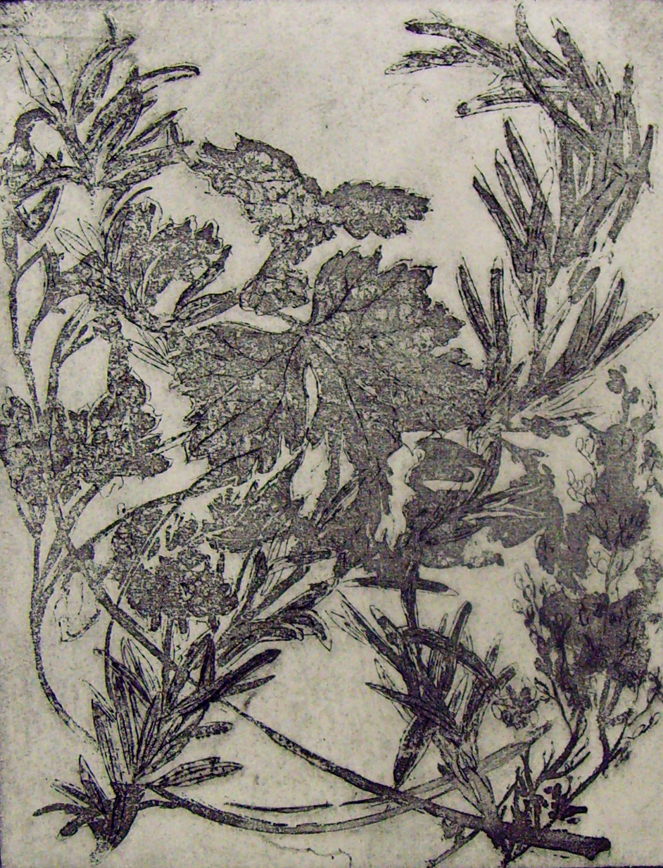 'Slow Burning Sprigs' Hunger Collection [Poetry Illustrations] - Etching - 15x18cm.jpg