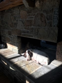 """Sadie """"In"""" the fireplace."""