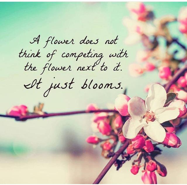 just bloom shaun robinson
