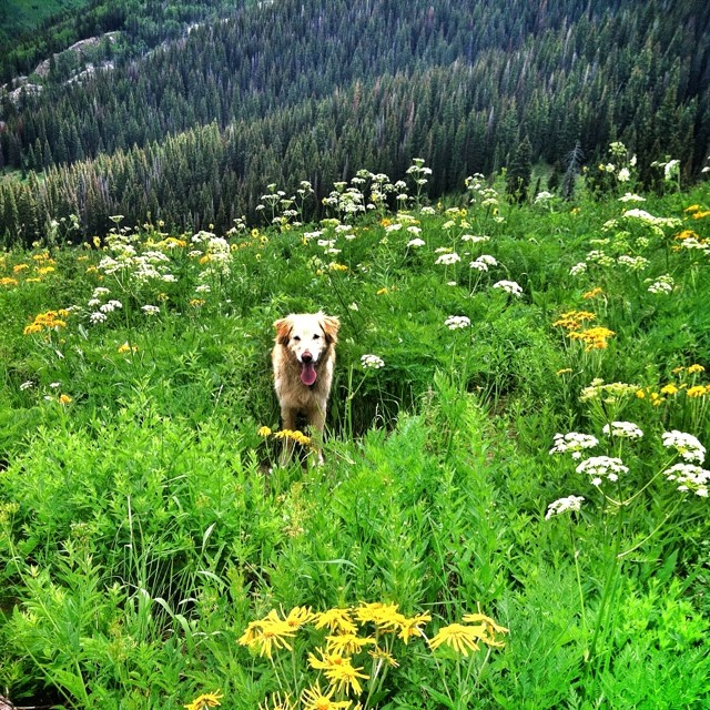 Escaping the heat with the Rilke-star. Cross country hike anthracite pass to mudd peak. Much burlier hiking than skiing.