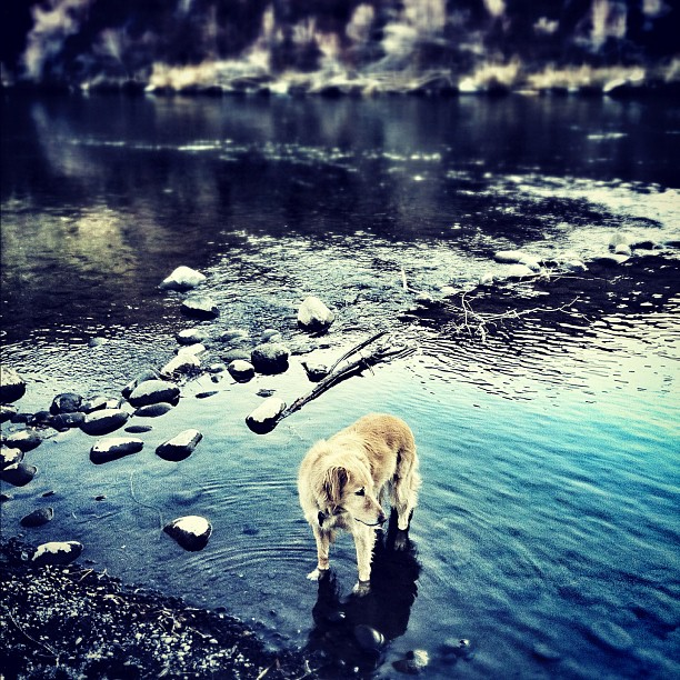 Rilkey at the Truckee river, Nevada. (Taken with  instagram )