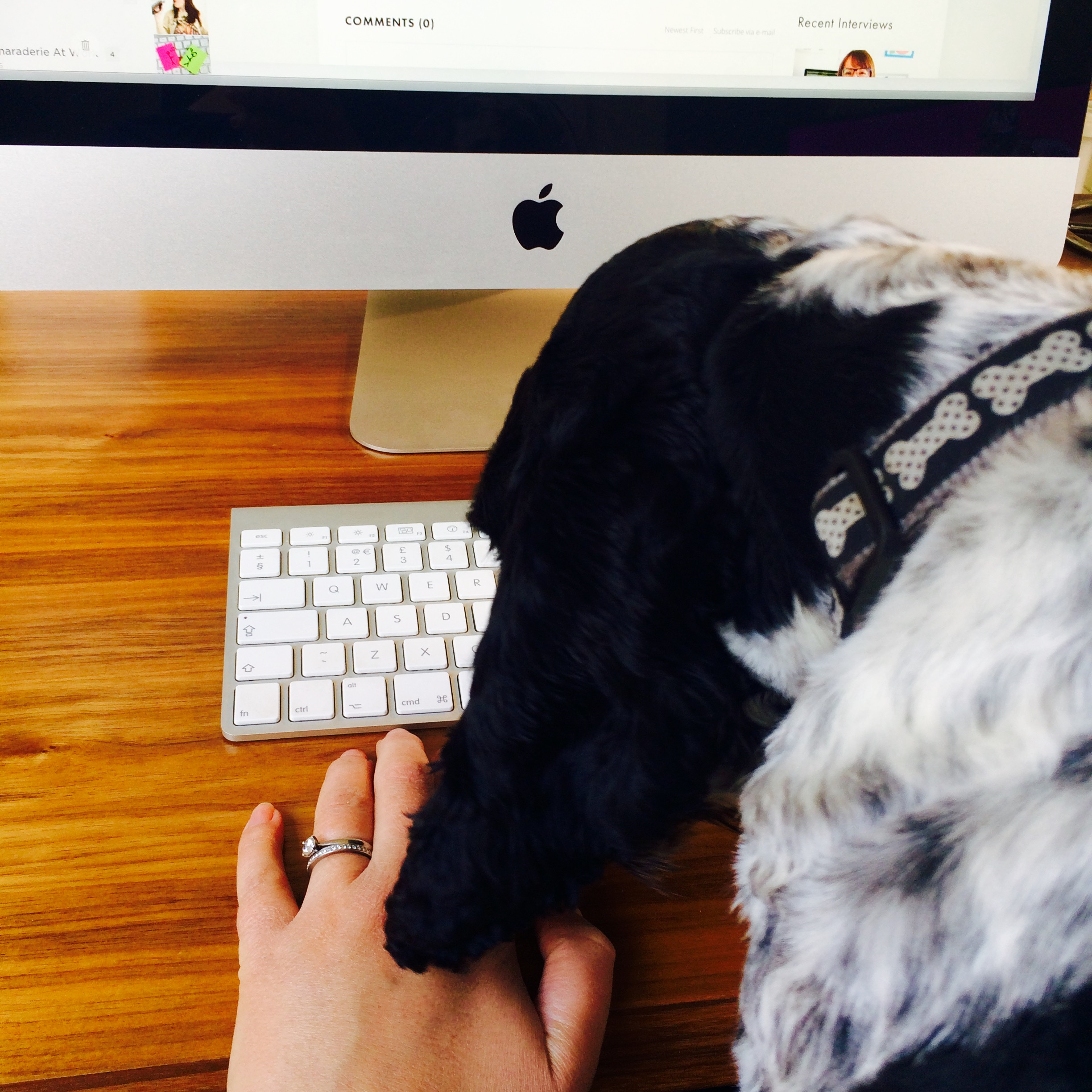 Bring Your Dog To Work Day 2015
