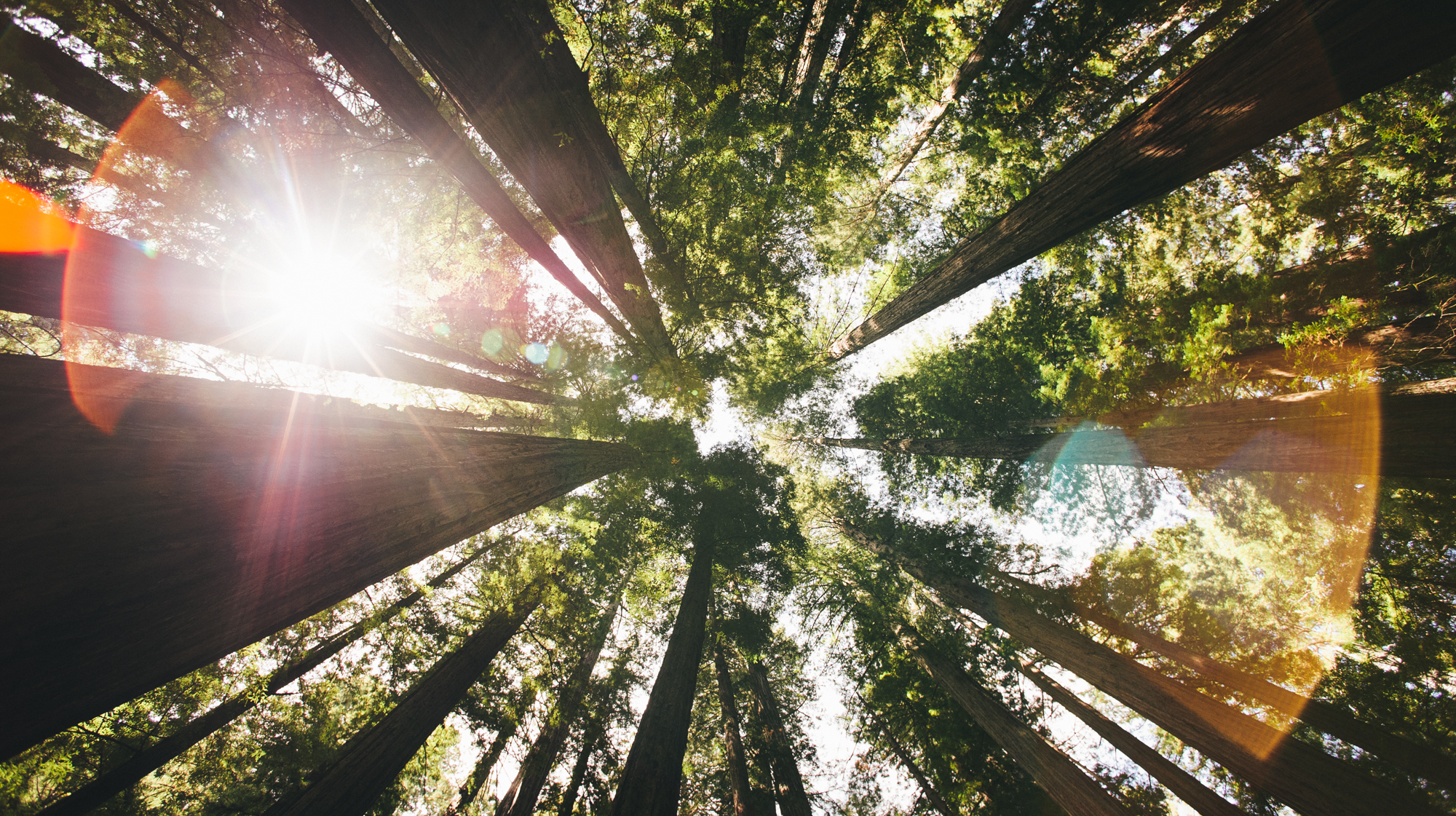 Valley of Redwoods