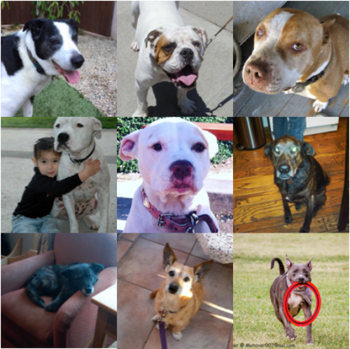 Remembering some of the many dogs who have made an impact on our Wags and Walks family.