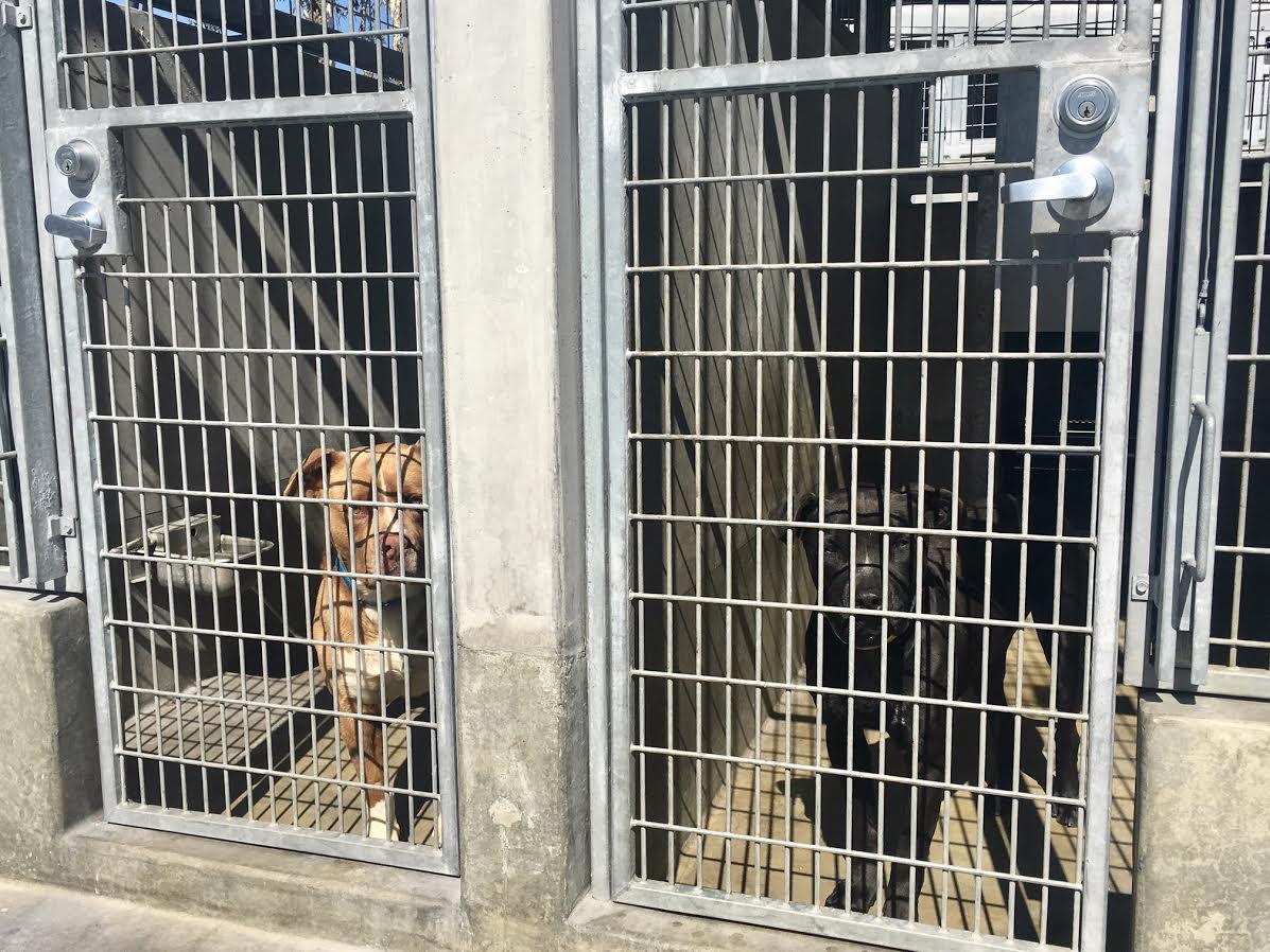 South_LA_shelter_dogs.jpg