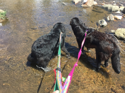 Standing ankles deep in a creek is suddenly fun when you're with your dogs