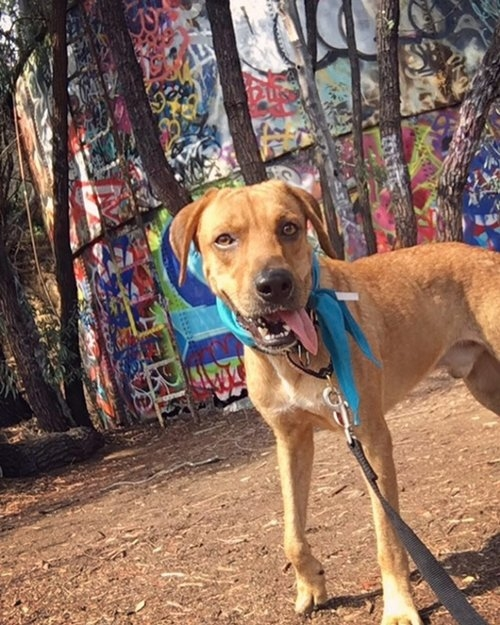 Meet  Eric Taylor ! He is on a leash with a proper collar while on his hike, making him a joy to see out on the trail.