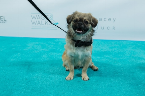 Wags and Walks_Benefit Gala