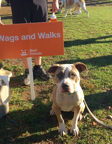 Wags and Walks_Strut Your Mutt