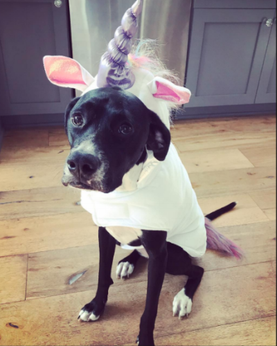 Wags and Walks_Halloween_Unicorn