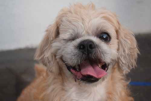 Wags & Walks_Adopt A Senior Pet Month_Popeye