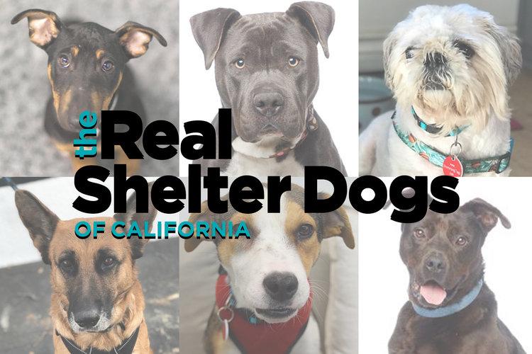 realshelterdogs.jpg