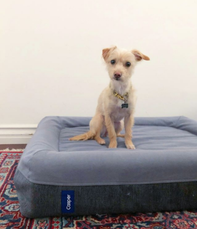 @pippen.the.pup enjoying her new Casper dog bed