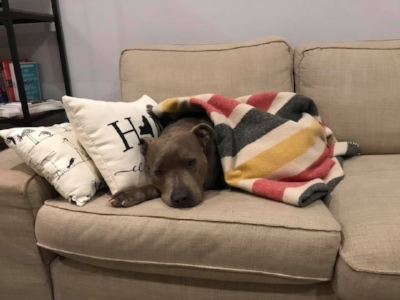 Raina , all snuggled up this winter