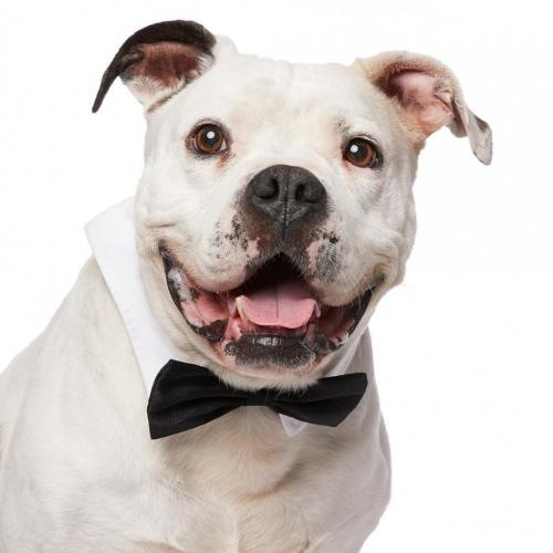 Wags and Walks_Senior Dog_Teddy