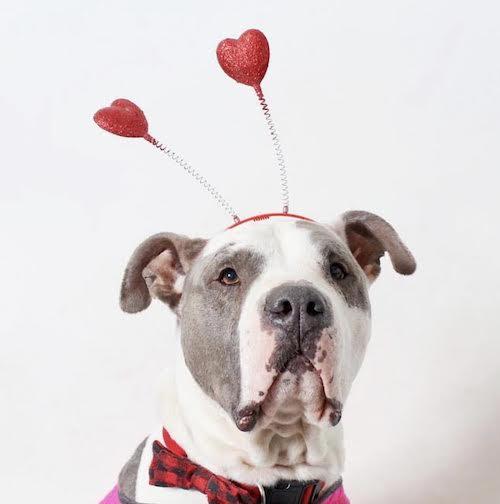 Wags & Walks_Valentine's Day