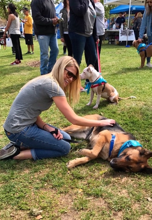 Wags and Walks_National Dog Rescue Day