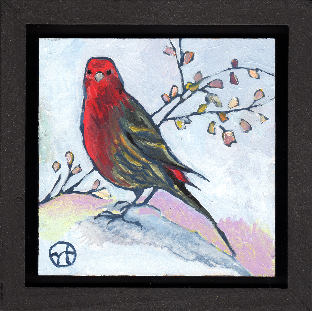 The house finch that visited my garden