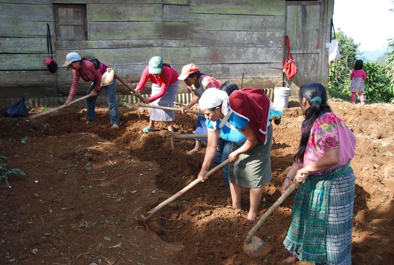 Women preparing the land for the garden
