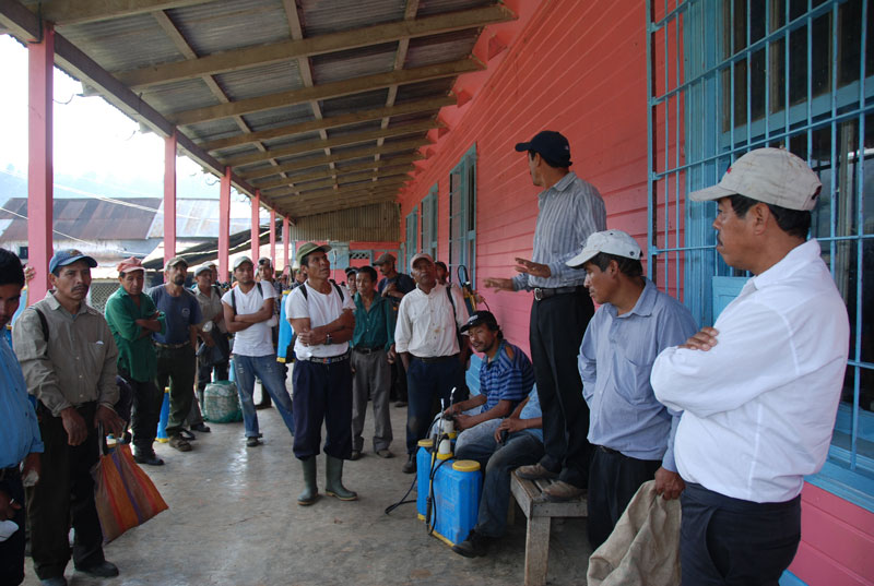 Timo, one of the veteran San Miguel farmers, trains some of the Santa Anita coffee farmers about roya.