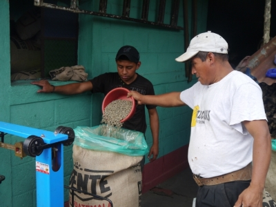 Farmers preparing the green coffee of 2014for export.