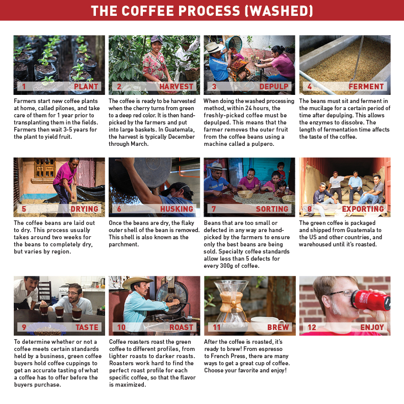 washed coffee process