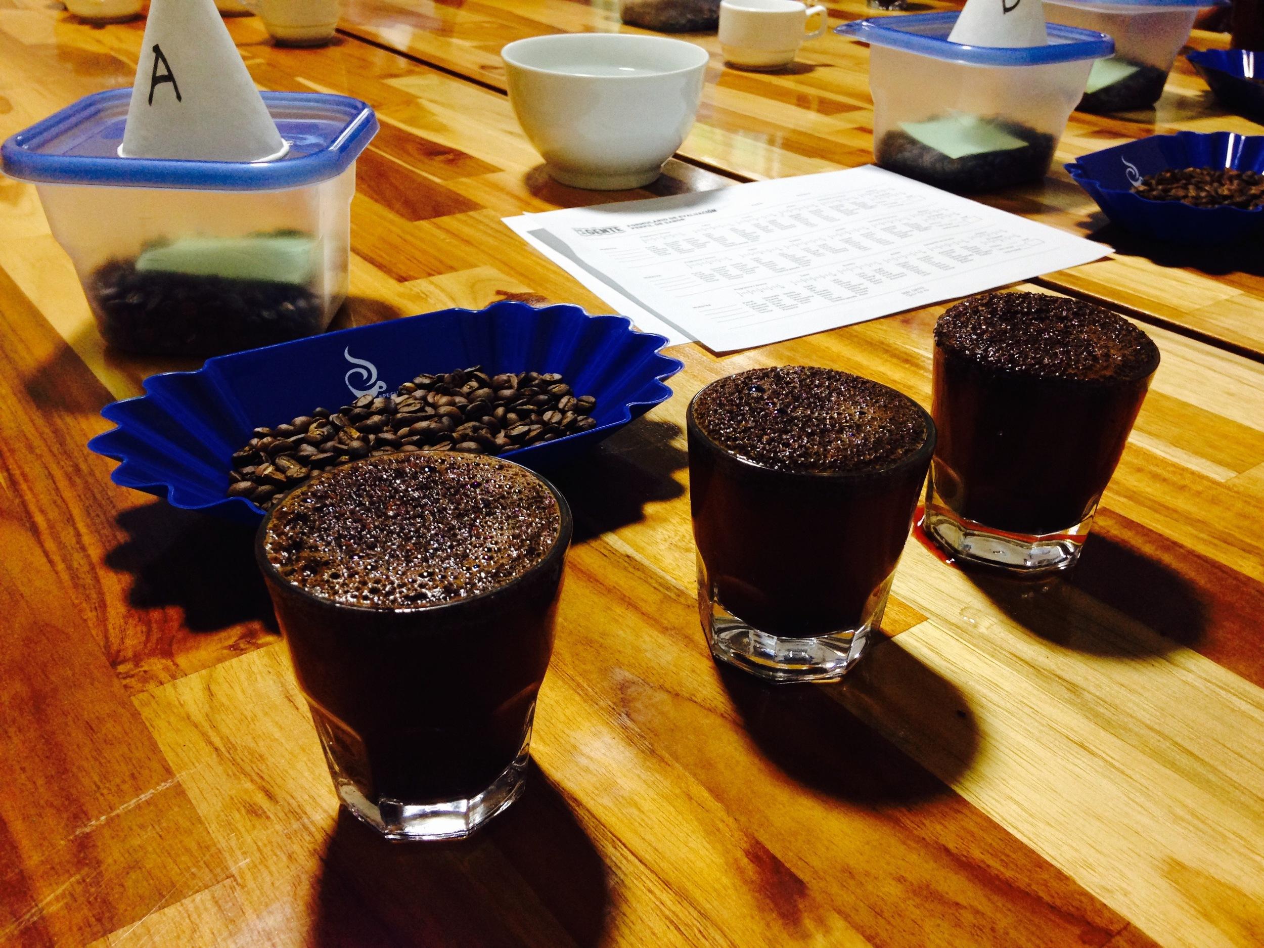 Coffee samples.jpg