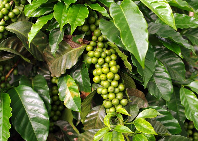 Gabriels-coffee.png