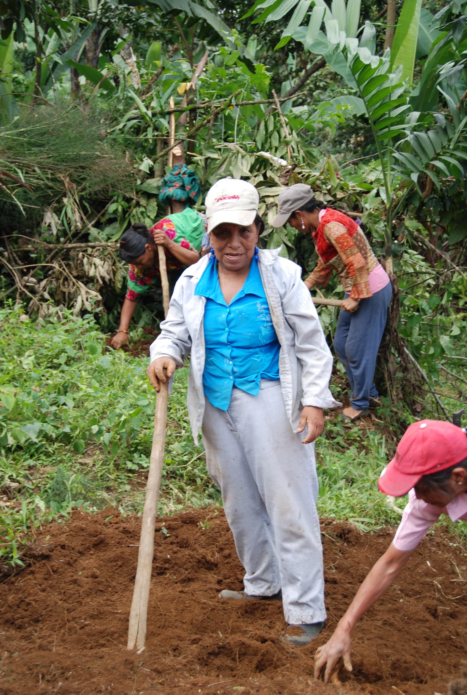 Woman planting.JPG