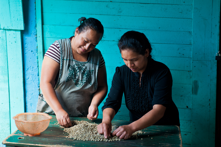 Virgilia & Lesbia sorting green coffee for export
