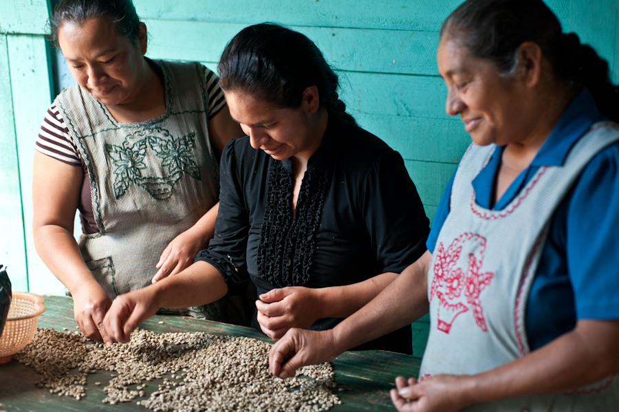 Lesbia sorting green coffee beans with her extended family