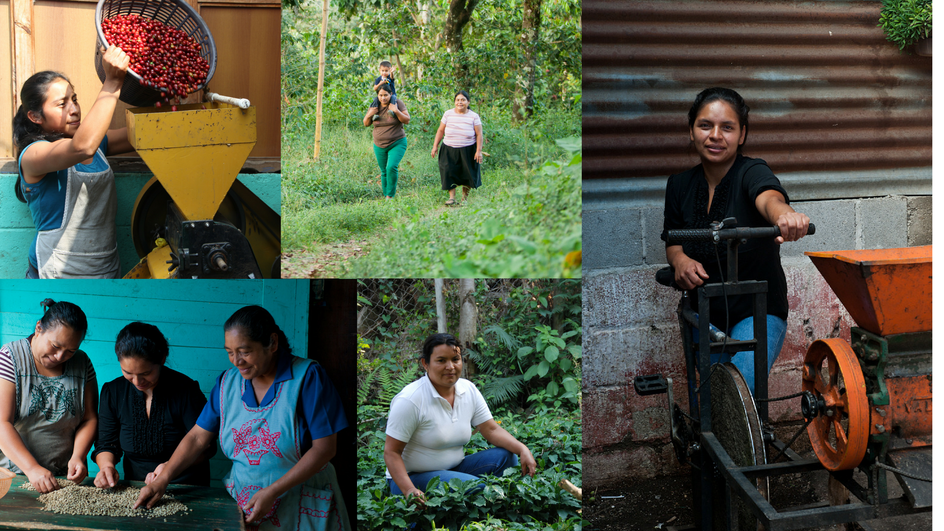 collage of women working
