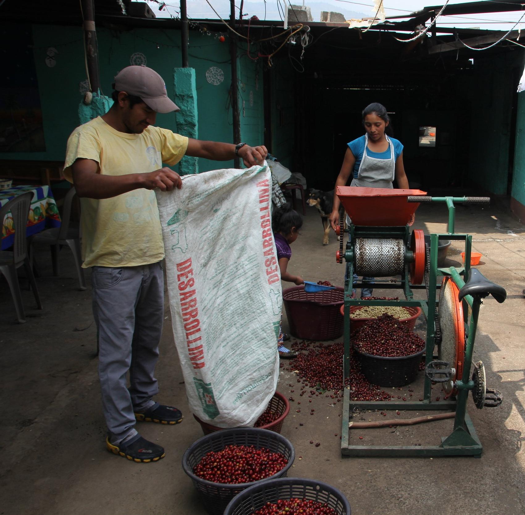 Mario & Valeriana depulping coffee
