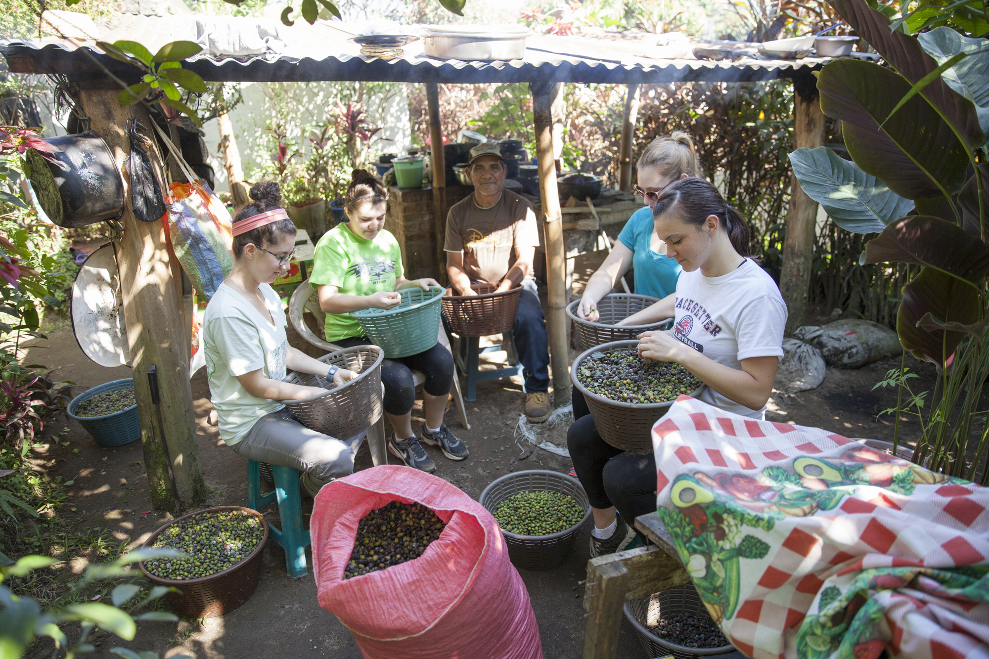 Groups spend time in the homes of the coffee producers working side to experience the local culture while sorting coffee for quality.