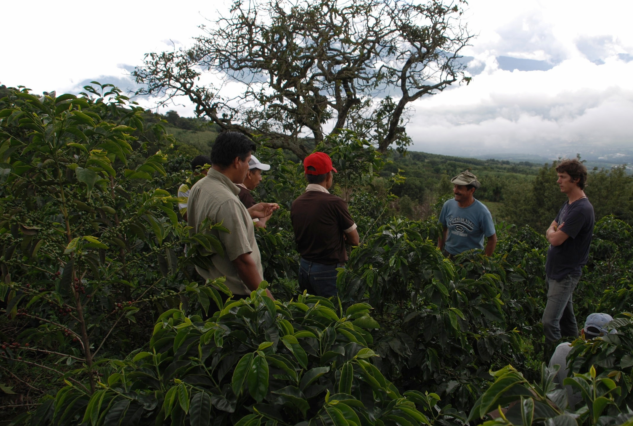 Congress participants visiting coffee fields.